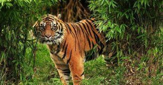 Hewan Yang Hampir Punah Di Indonesia