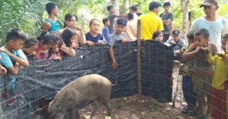 Babi Hutan Jelmaan Manusia