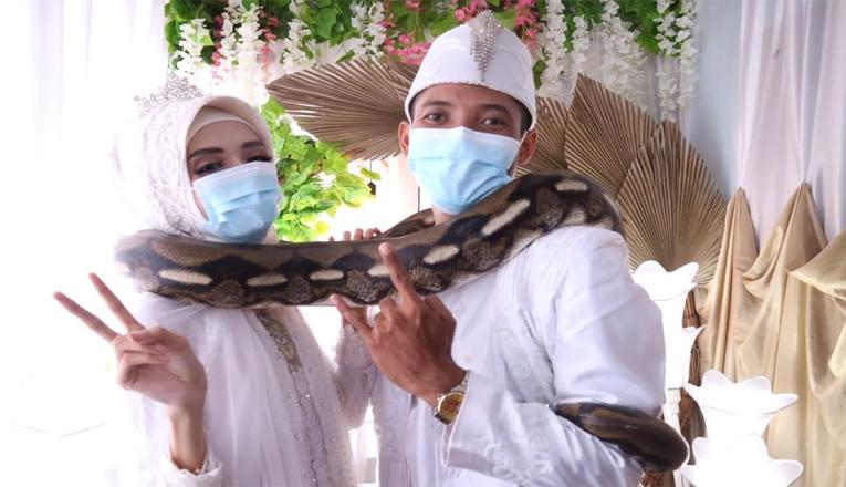 Pecinta Reptil di Bogor Menikah, Maskawin Diberikan Ular Piton