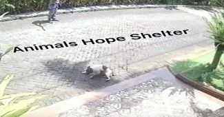 Aktivis Hewan Mengutuk Penembakan Anjing Lalu Diseret yang Menjadi Viral di Media Sosial